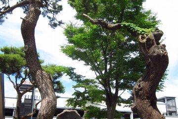 Japanese garden at Hotel Grantia Akita Spa Resort