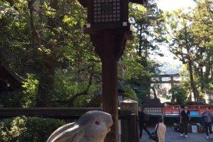 Rabbit Shrine うさぎ神社