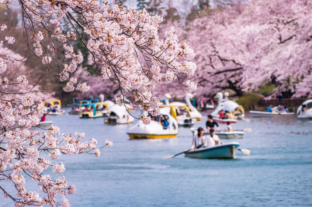 Taman Chidorigafuchi di Tokyo