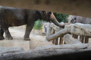 大象好霸气