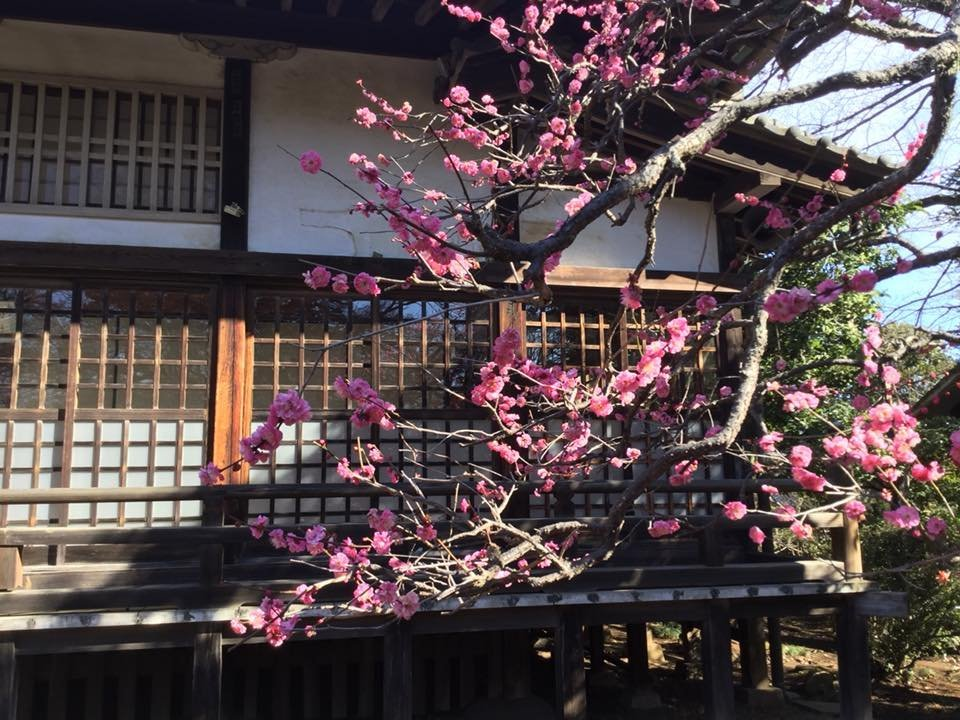 The pink plum blooms first in front of Konjoin Temple