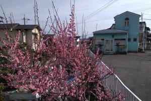 Street scene, Otsu