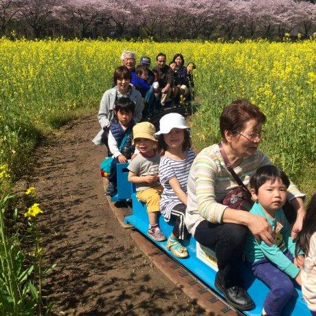 Lễ hội mùa xuân Kinchakuda lần thứ 11