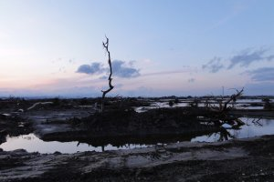 A solitary tree remains standing in the aftermath