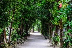 Pohon-pohon fukugi cantik yang berderet rapi di sepanjang jalan Desa Bise