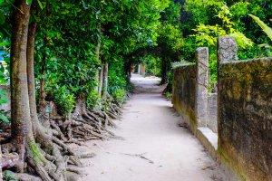 Jalan-jalan di Desa Bise adalah lokasi yang sempurna untuk berjalan-jalan dan menikmati suasana desa yang tenang