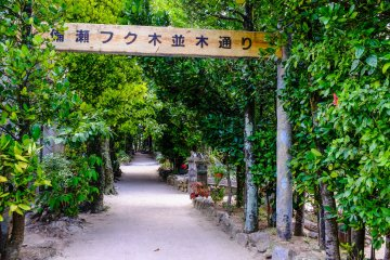 Desa Bise, Okinawa