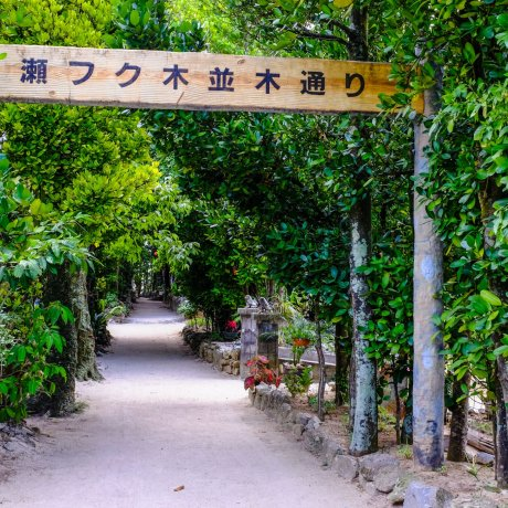 Bise Village, Okinawa