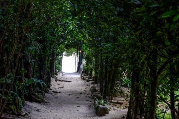 At each intersection, you can see the ocean at the end of the fukugi tree tunnel