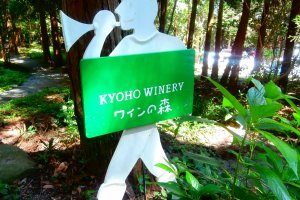 The forest of wine is what this grove is called
