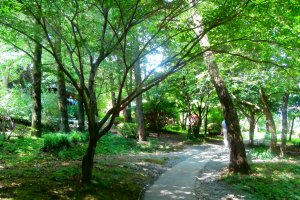The trees providepleasant shade and letin the nice and cool breeze