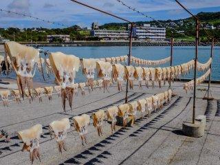 오우지마에서는 신선한 오징어를 햇볕에 말리는 풍경을 자주 볼 수 있다.