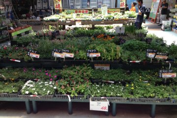 Flowers and ground cover for next to nothing neatly arranged in Make Man's garden center