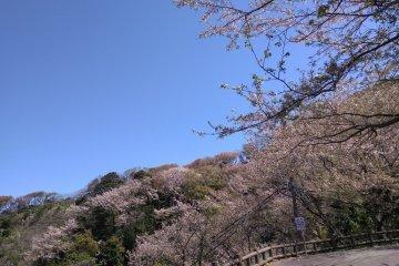 Pink lushness on Otonashi