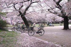 Многие приезжают в парк на велосипедах