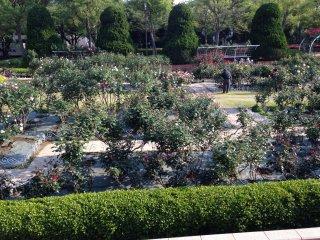 Вид на розарий с галереи
