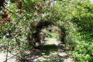 A rose trellis