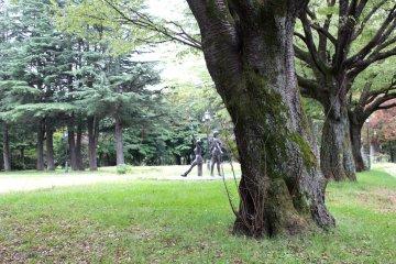 Old trees of Higashi Park