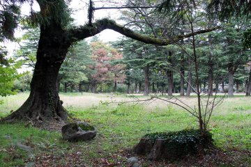 Higashi Park