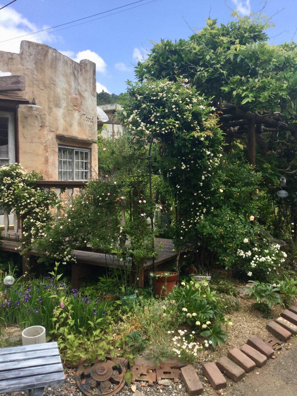 An English garden out of nowhere.
