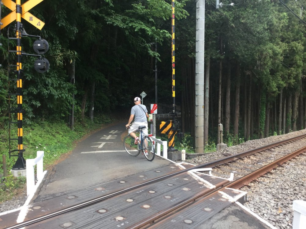Cycle into a forest beside the train tracks