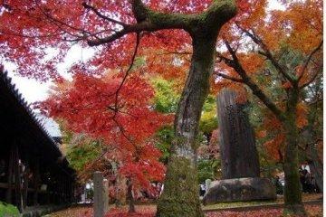京都,红叶与寺庙的完美结合