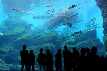 Sendai Umino Mori Aquarium
