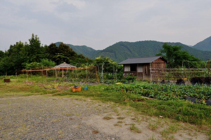 Яичная ферма находится на холме в 10 минутах езды на машине от Хонгу
