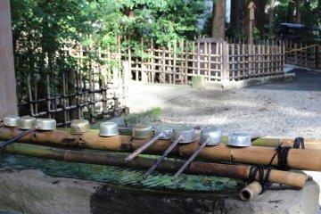 A purification basin