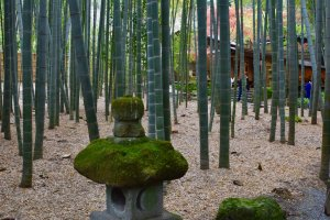 The path leads through a small and beautiful bamboo grove to a macha tea house