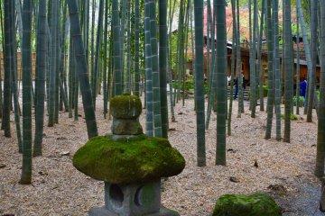 Эта тропа в маленькой красивой бамбуковой роще ведет к чайному домику