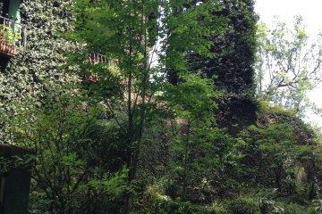 Башня, поросшая зеленью