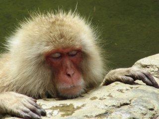 Relaxing in onsen
