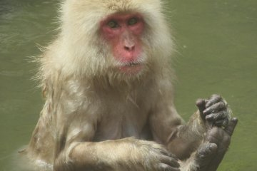 One more relaxing monkey