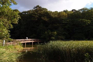 Shakui Park is an oasis in Nerima