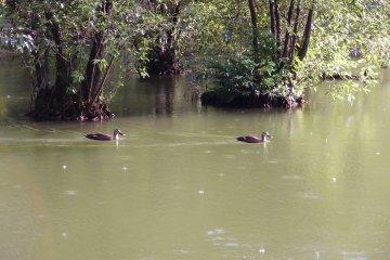Some of the birds of Sanpoji Pond