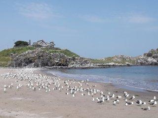 해변에서 쉬고 있는 갈매기들