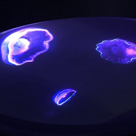 Hikari Enosui - Illuminated Underwater Wonderland