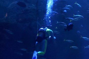 Diver