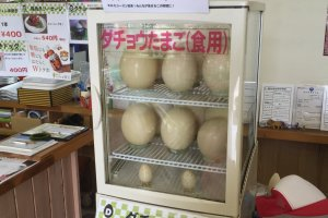 Ostrich eggs for sale
