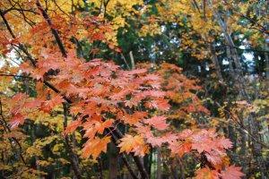 Beautiful autumnal hues