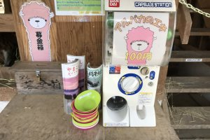 For 100 yen, you can get feed for the alpacas