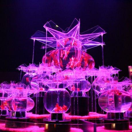 The 2019 Art Aquarium Exhibition in Tokyo