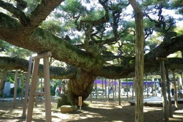 A treasure of nature in Edogawa City