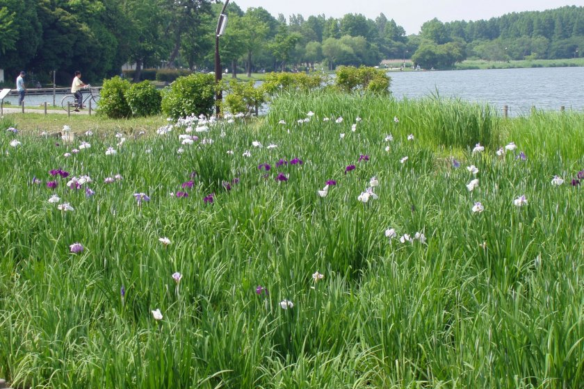 The lush green of Mizumoto Park in