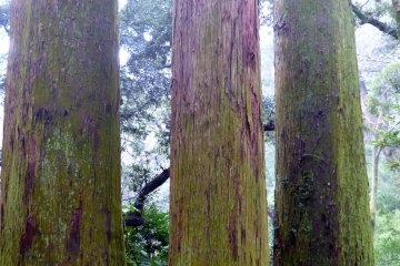 Sanbonsugi, the three cedars