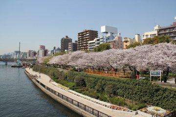 Sumida Riverside Park
