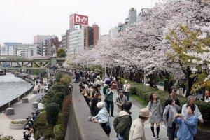 Visitors enjoying a stroll in spring in Sumida Park