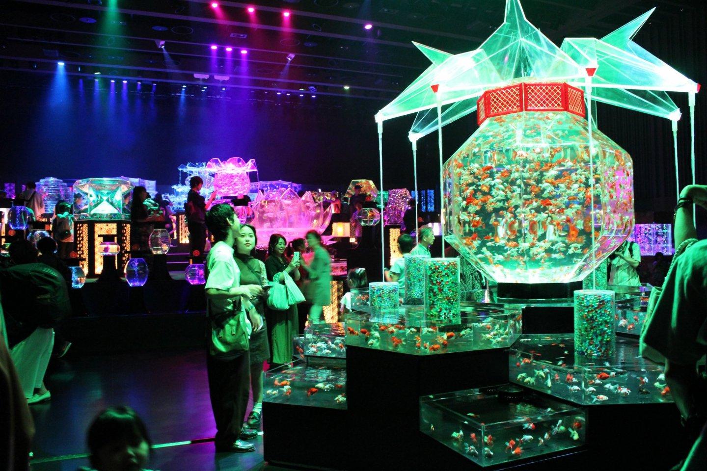 At the Art Aquarium 2019 exhibition