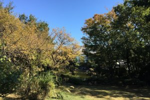 Spying Adachi Museum through the trees of the garden